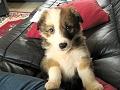Essential puppy training commands