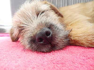 Dog Walker/Pet Sitter in Berkshire