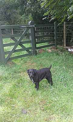 Barking Byre Doggy Day Care & Home Boarding