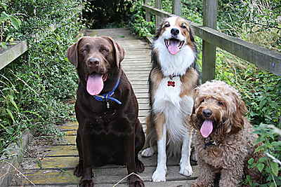Dog Boarder and Day Care in Maidenhead - Berkshire