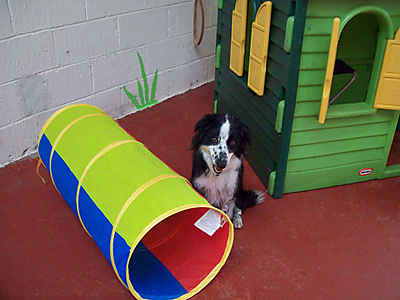 Day Care 4 Paws - Dog Day Care Centre (and more!) - Consett, County Durham