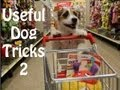 movie thumbnail Useful Dog Tricks performed by Jesse the Jack Russell Terrier