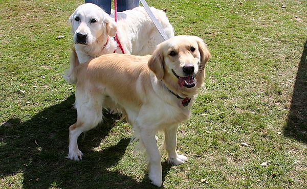 Cranbourne Annual Companion Dog Show
