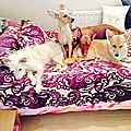 photo thumbnail Molly, Foxy, Dave & Tilly