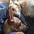 photo thumbnail Molly & Foxy