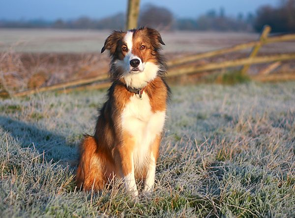 Woody posing in the frost