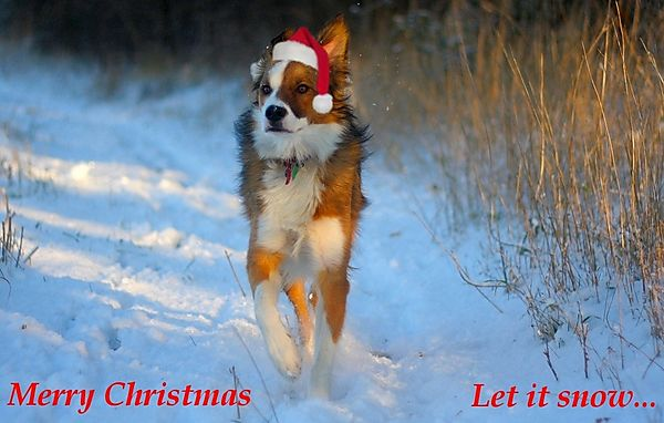 Merry Christmas everyone...