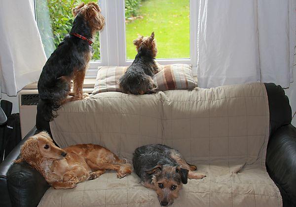 The Dog's Sofa