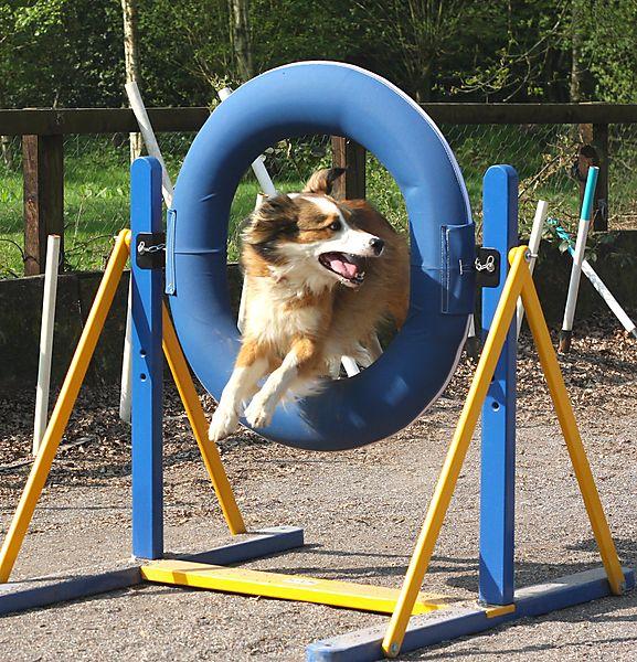 Agility Tyre Jump