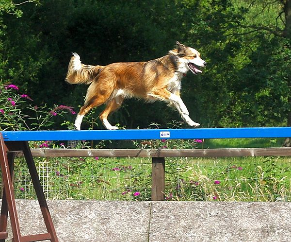 The Walker at Agility