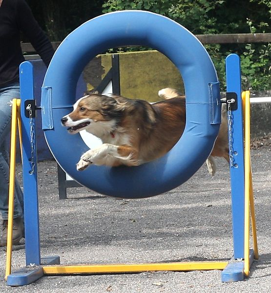 Through the Type Jump at Agility