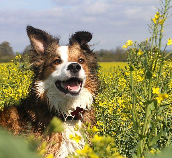 Springtime for Dogs