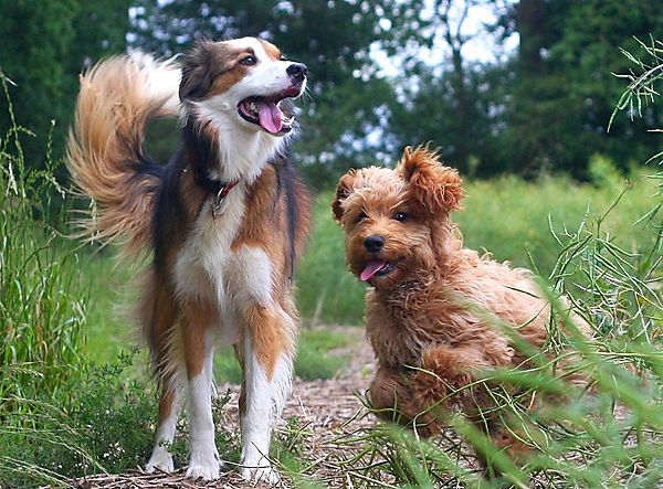 Happy Dog Pals
