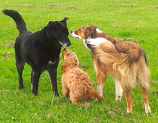 Dogs meeting...