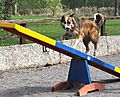 Agility See-Saw