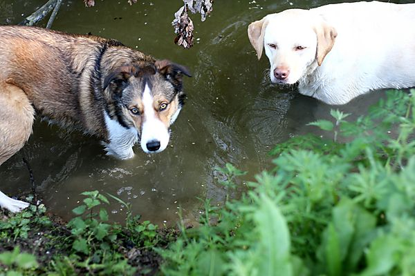 Most Dogs love water
