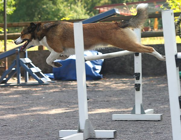 Agility - Merlin doing Jumps