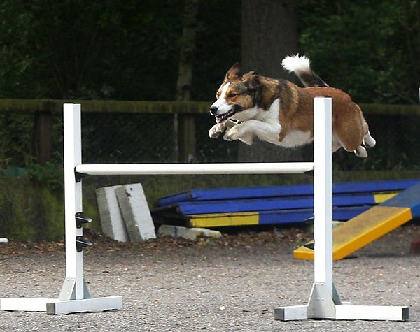 Agility Jumps