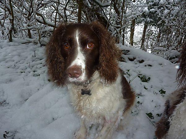 Monty in Winter Wonderland