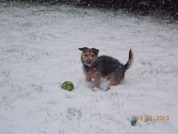Punch enjoying the snow