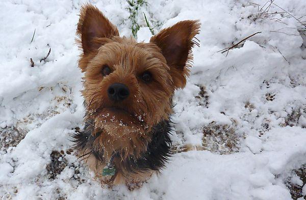 Morgan posing in the Snow