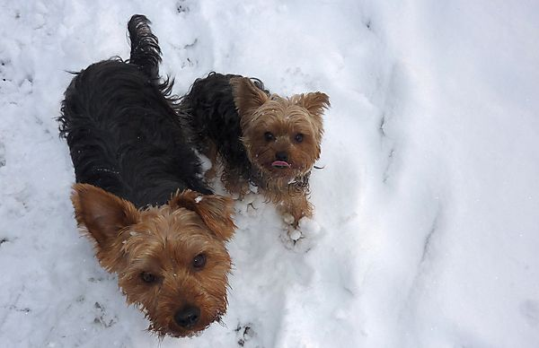 Brother and Sister enjoying the Snow