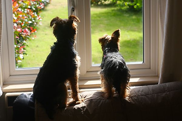 Dogs waiting for Mum