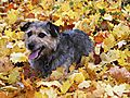 photo thumbnail Autumn Leaves