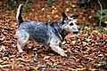 photo thumbnail Punch on Autumn walks
