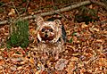 photo thumbnail Autumn girl