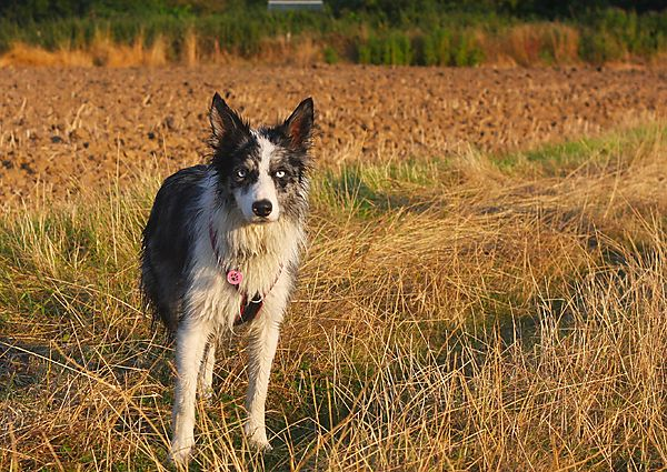 Kassie on one of her walks