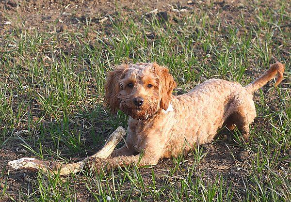 Every dog loves a stick....