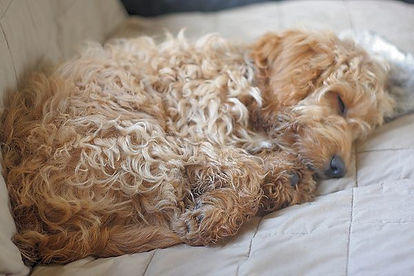 A dog has to sleep sometimes