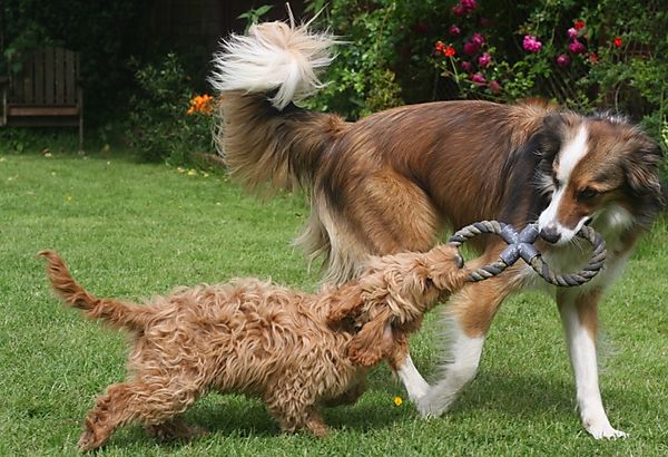 Having a game of Tug