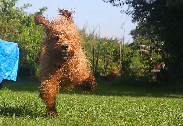 Run with Joy