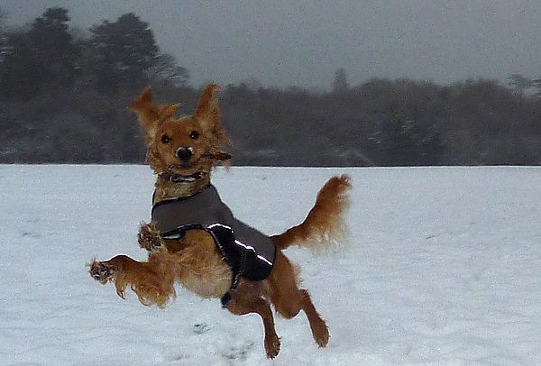 Marley bouncing through the snow