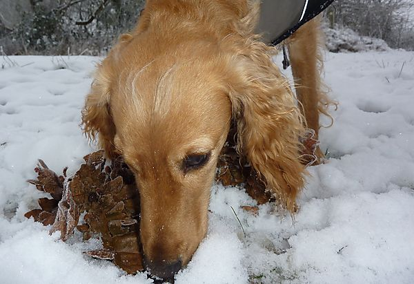 Sniffing out a stick