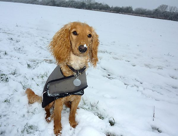 Marley posing in the snow