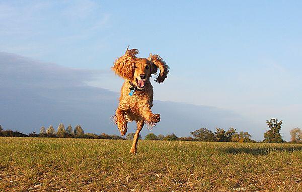 Marley flies