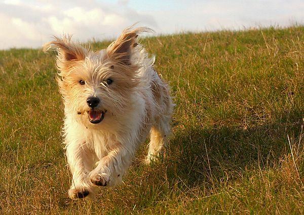 Billy running along