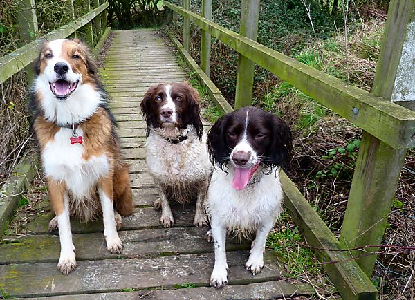 Woody, Monty and Molly