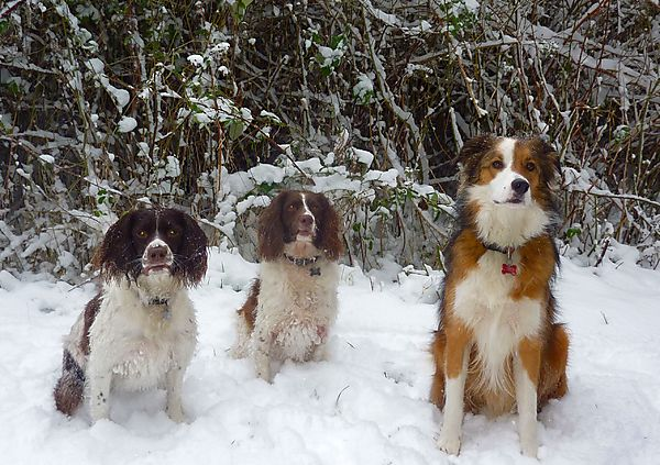 Snowy walks with the dogs