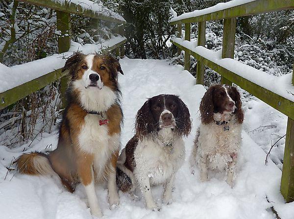 Dogs Treat Bridge in the Snow