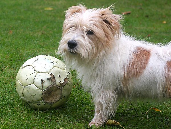 Someone play Football with me