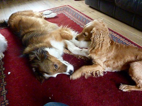 Marley & Woody