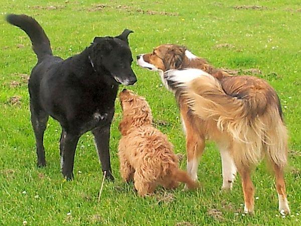 Doggie greetings