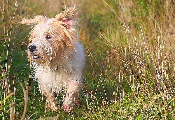 Billy the Terrier