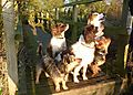 photo thumbnail Dogs Pals