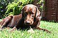 photo thumbnail Sunday bone