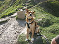 Theo dog